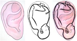 Fetus Ear