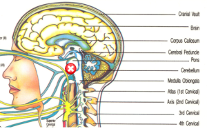EAR PORTAL